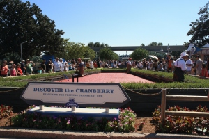 Harvesting Cranberries in Epcot
