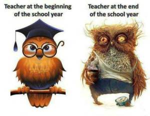 Owl Teachers